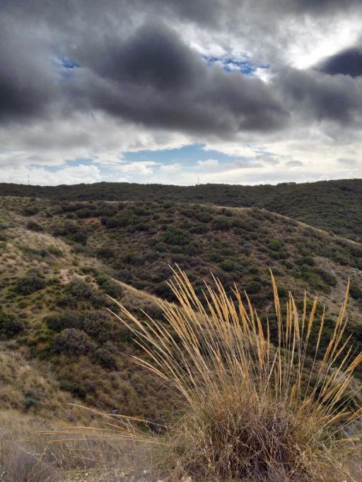 Campos del paraje El Butarrón