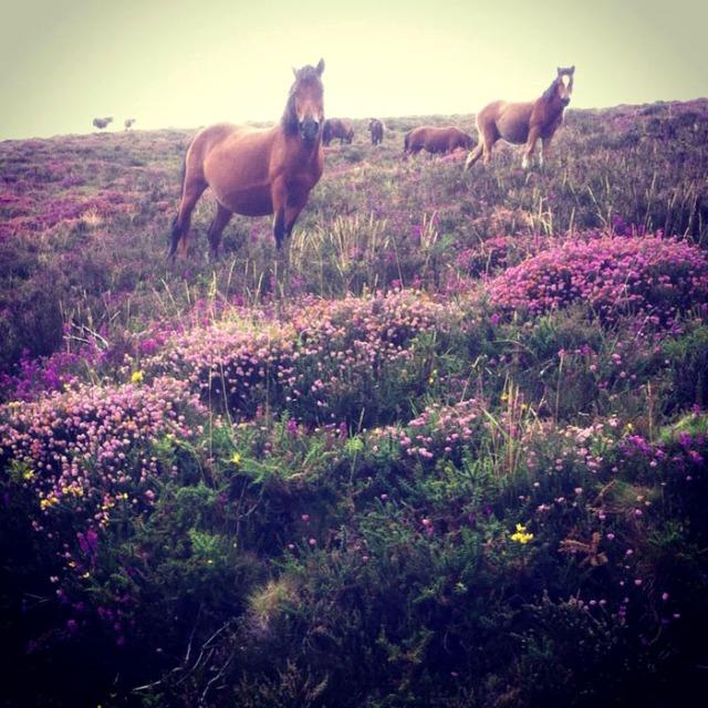 Los caballos, otro de los espectáculos de esta sierra