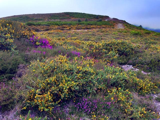 Las flores adornan las laderas del Pico de Murias (Alrededores del Pico de Murias).