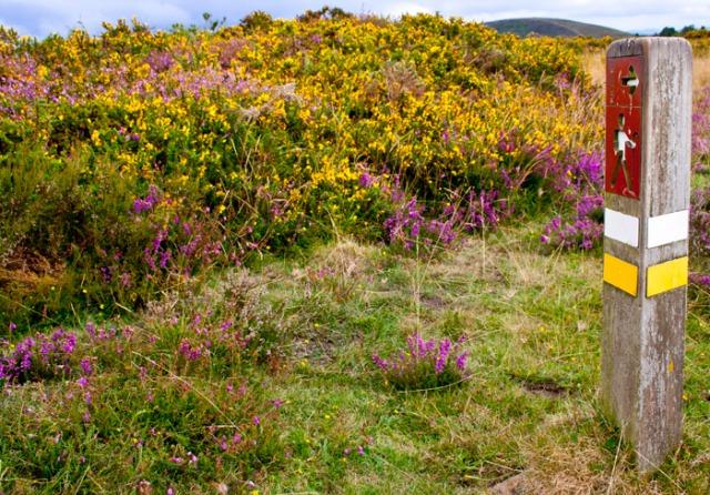 Camino muy floral (Alrededores del Pico de Murias).